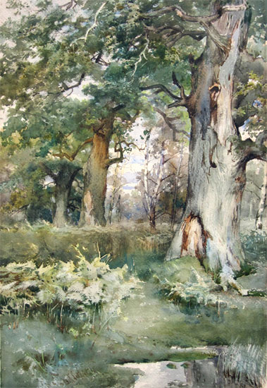 Frank Saltfleet: Woodland Giants. Old Oaks. Sherwood Forest.