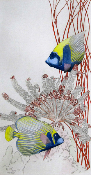 Freddy Theys: Angelfish