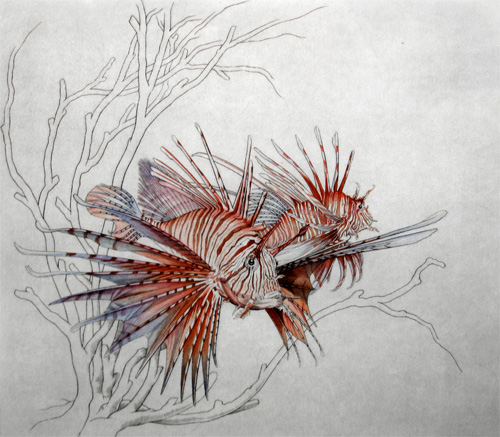 Freddy Theys: Peacock Lion Fish