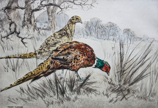 Henry Wilkinson: Cock and Hen Pheasant