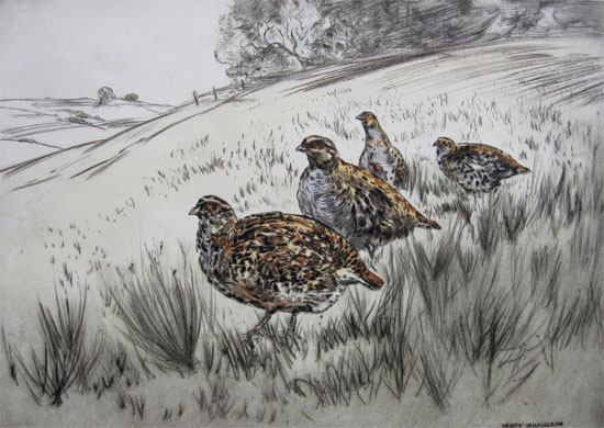 Henry Wilkinson: Grey Partridge