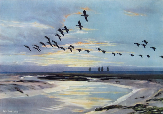 The Wash at Dawn. Pinkfeet by Peter Scott