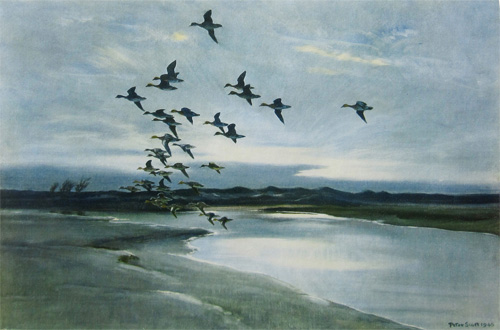 Wigeon Beyond the Dunes by Peter Scott