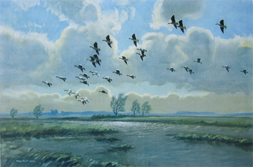 Pink Feet in the Green Marshes by Peter Scott
