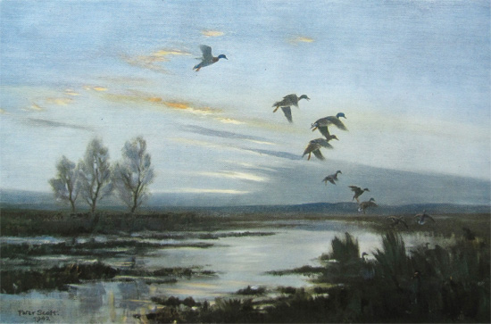 Sir Peter Scott: By Darkness the Marsh is Full of Mallards