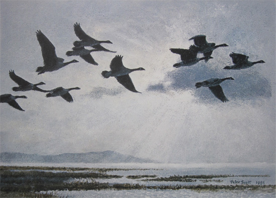Sir Peter Scott: Canada Geese in a Silver Sky