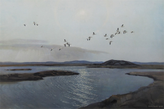 Sir Peter Scott: Summertime in the Canadian Arctic - Ross's Geese
