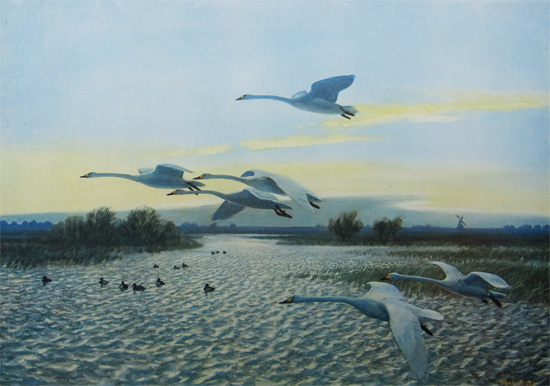 Sir Peter Scott: North Wind - Bewick Swans