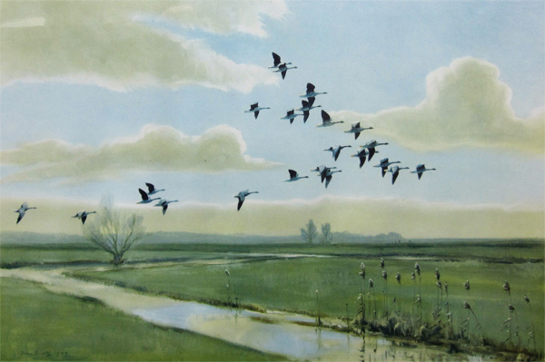 Sir Peter Scott: Pink Feet - the Wild Geese of England