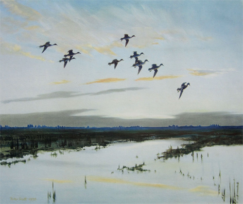 Sir Peter Scott: Pintails Dropping in with a Rush