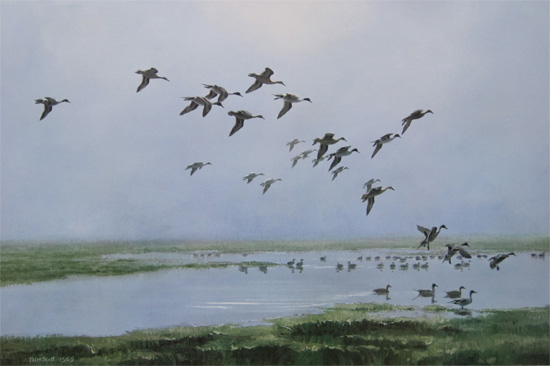 Sir Peter Scott: Pintails On A Hazy Day