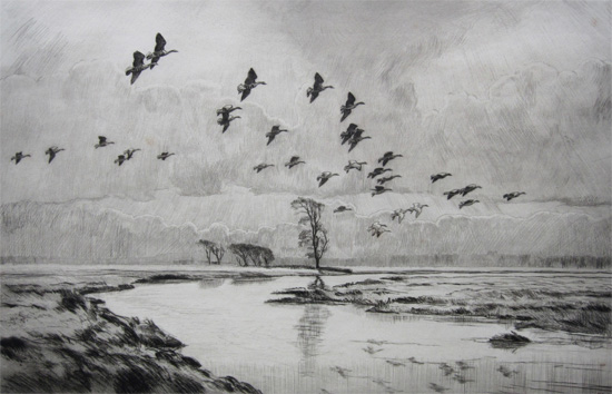 Sir Peter Markham Scott: White Fronted Geese