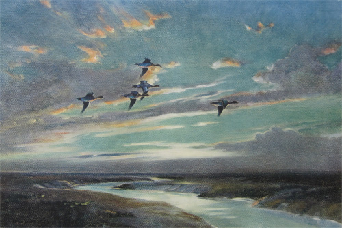 Sir Peter Scott: Wigeon Crossing Low Over The Creek