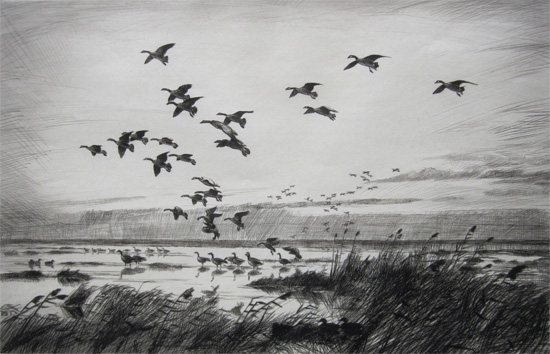 Sir Peter Markham Scott: Canada Geese Alighting