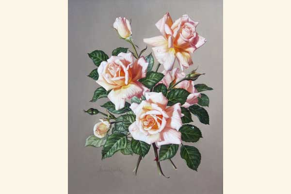 James Noble: Fleur Cowles Roses